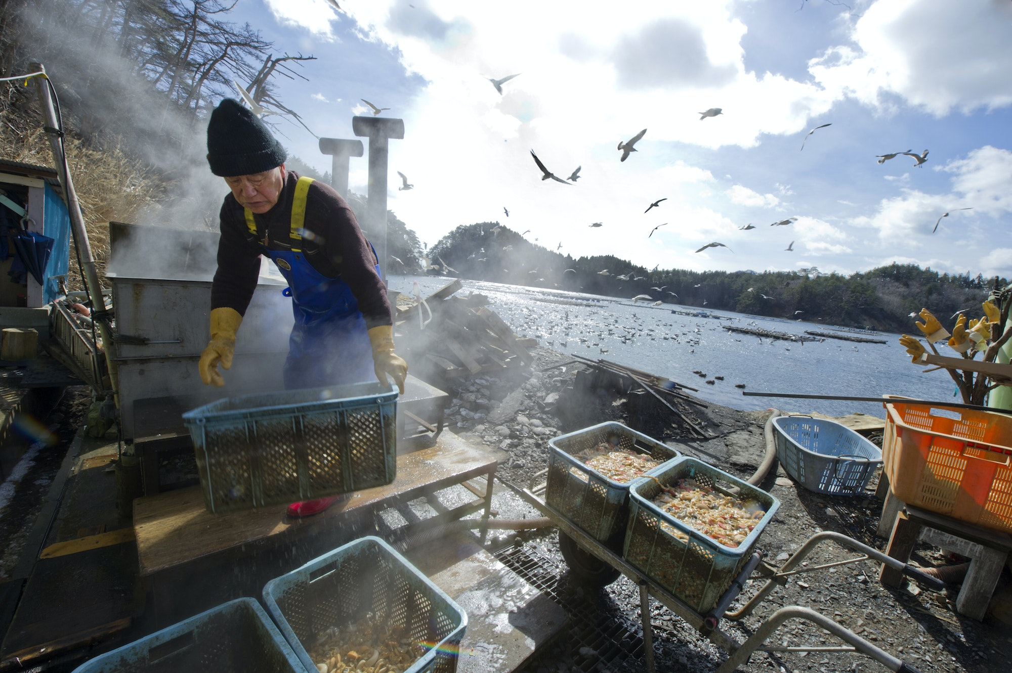 A village fisherman disposes of clam organs at a fishery in Moune Bay, in Japan's Miyagi prefecture.