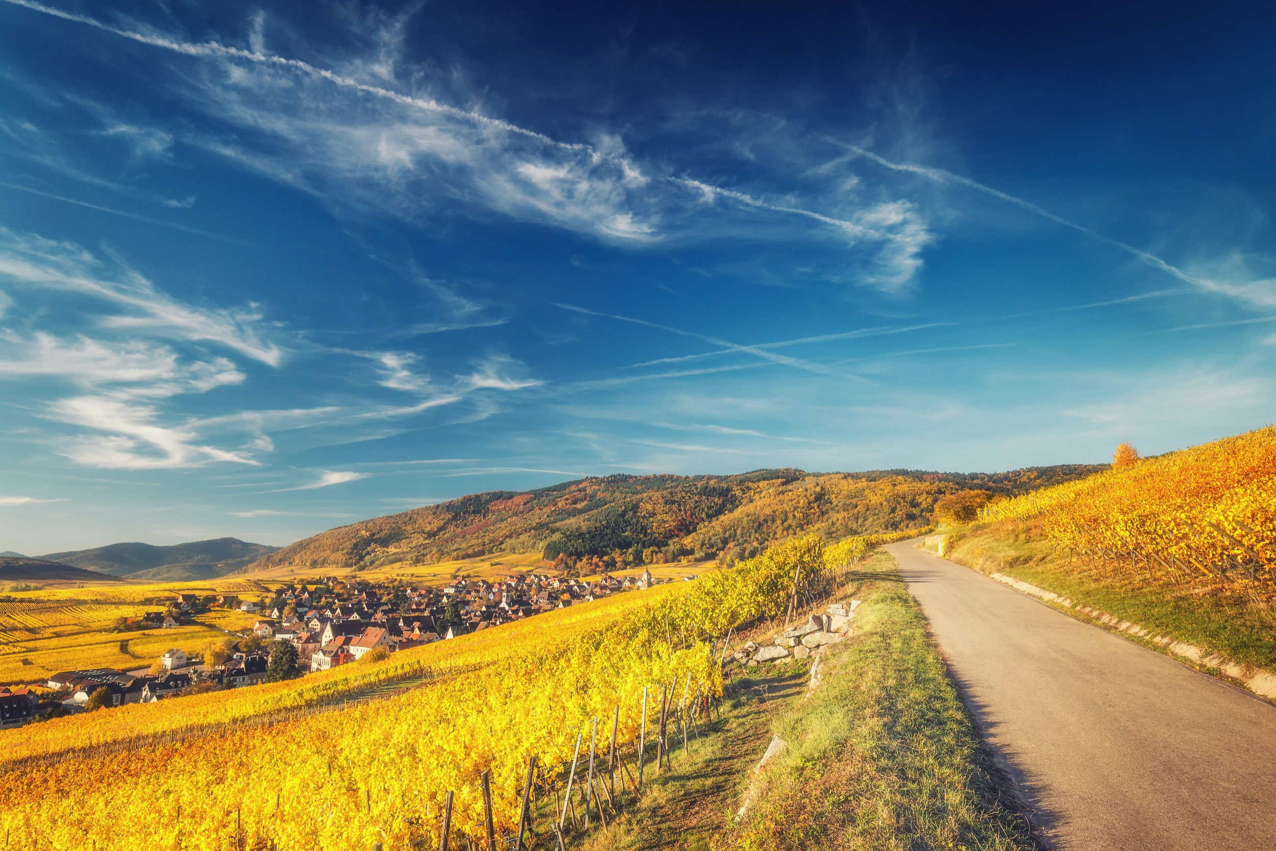 The Alsace region is home to scenic towns and great whites.