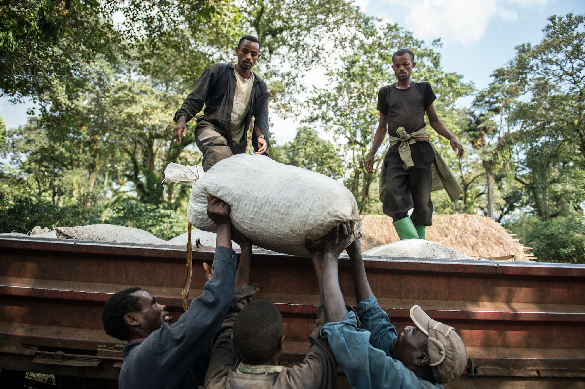 Workers load sacks packed with dried coffee beans to be transported to Addis Ababa, where the beans will be sold.
