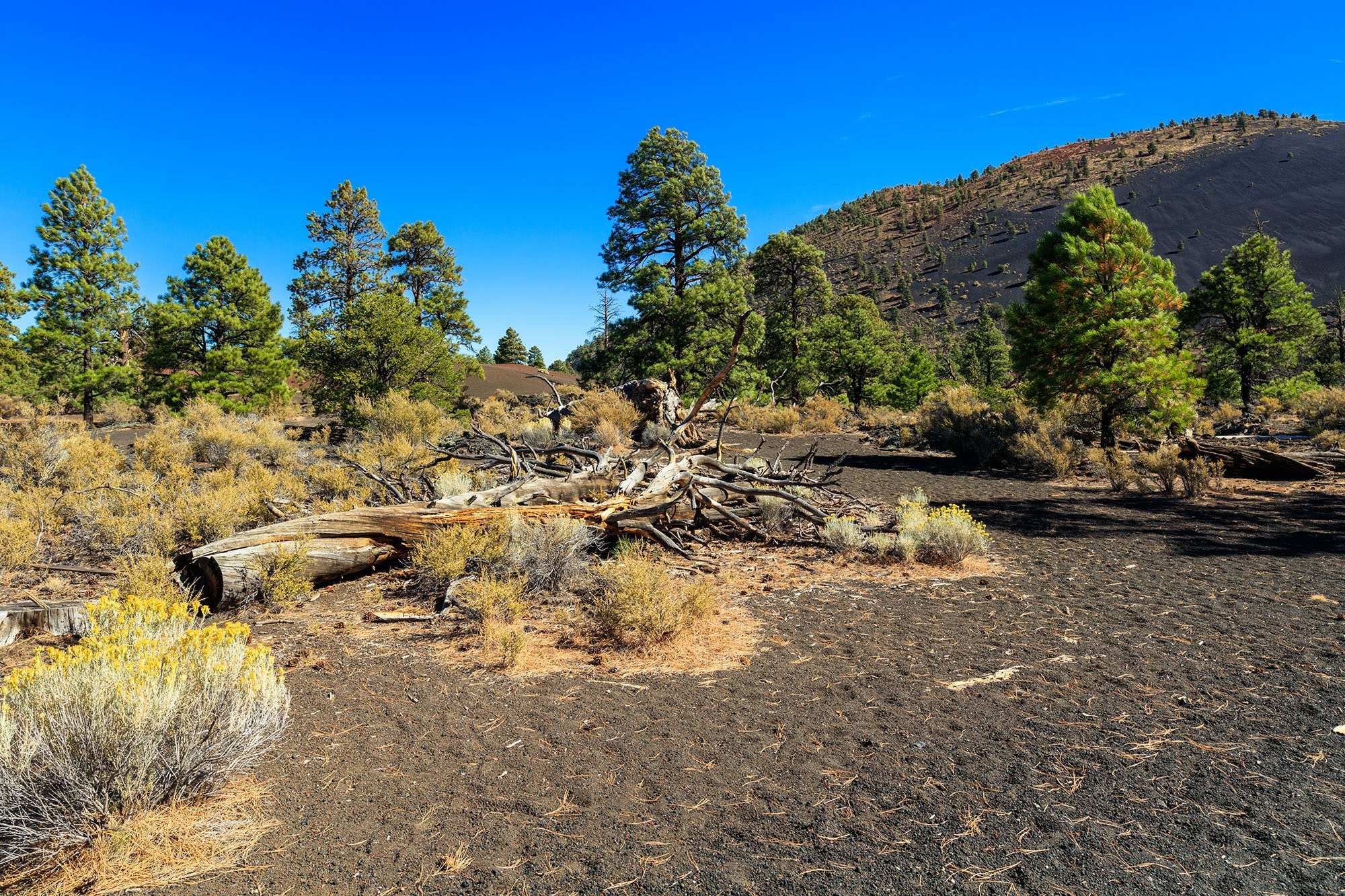 At Sunset Crater Volcano National Monument, you can hike over lava flow and cinder fields.
