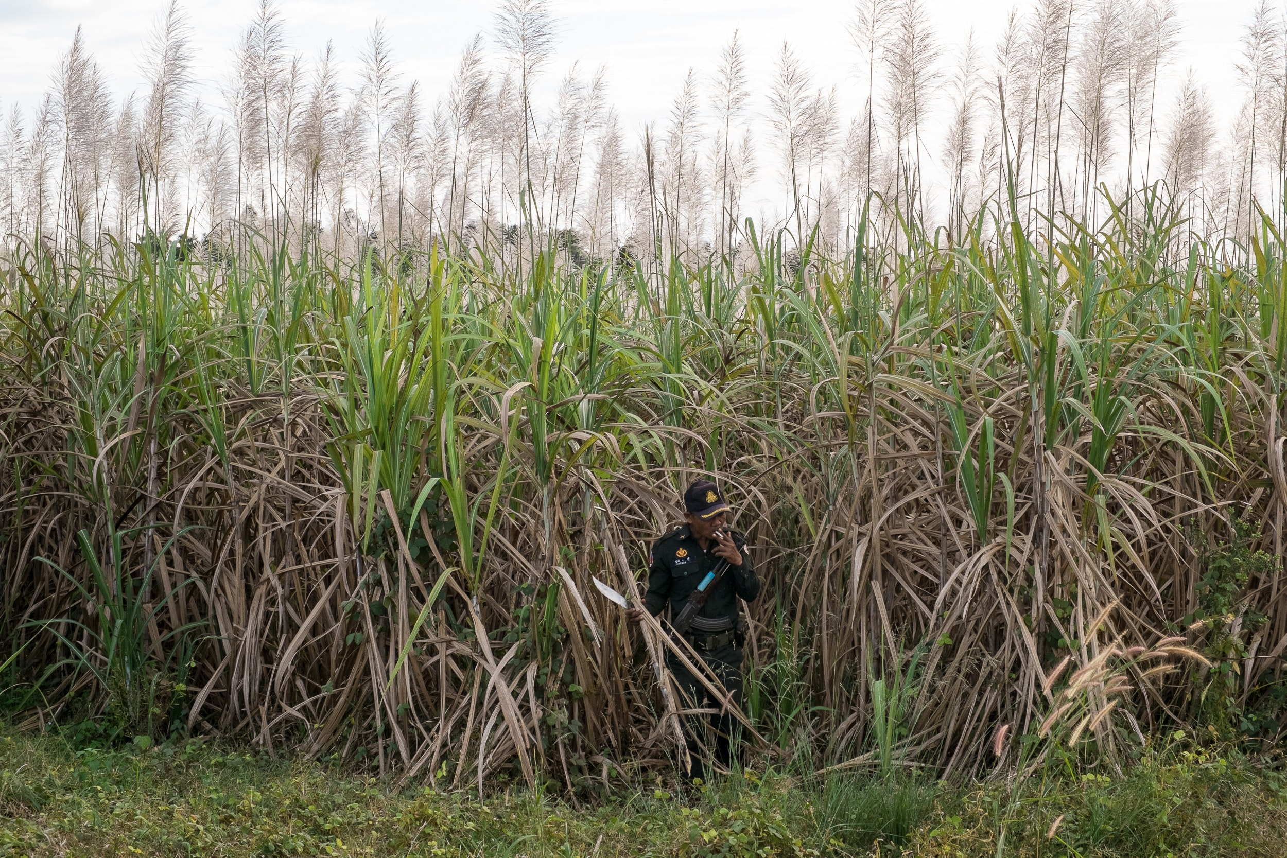 A ranger searches for evidence of illegal activities in a field