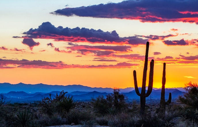 Phoenix and its metropolitan area are located in the Sonoran Desert, known for its iconic saguaro cacti.