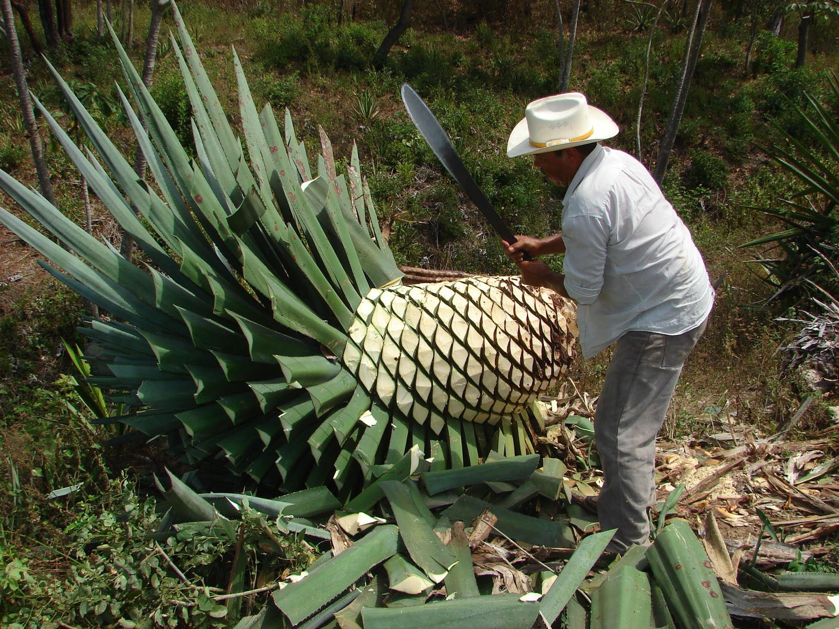 Is This the New Mezcal?