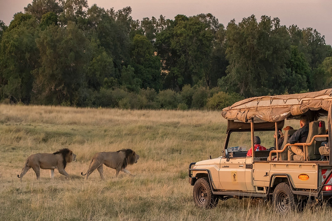 Porini Lion Camp is an excellent base for safari adventures in Maasai Mara National Reserve.