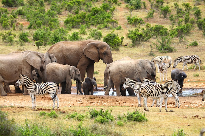 Addo Elephant National Park is the third largest national park in South Africa.
