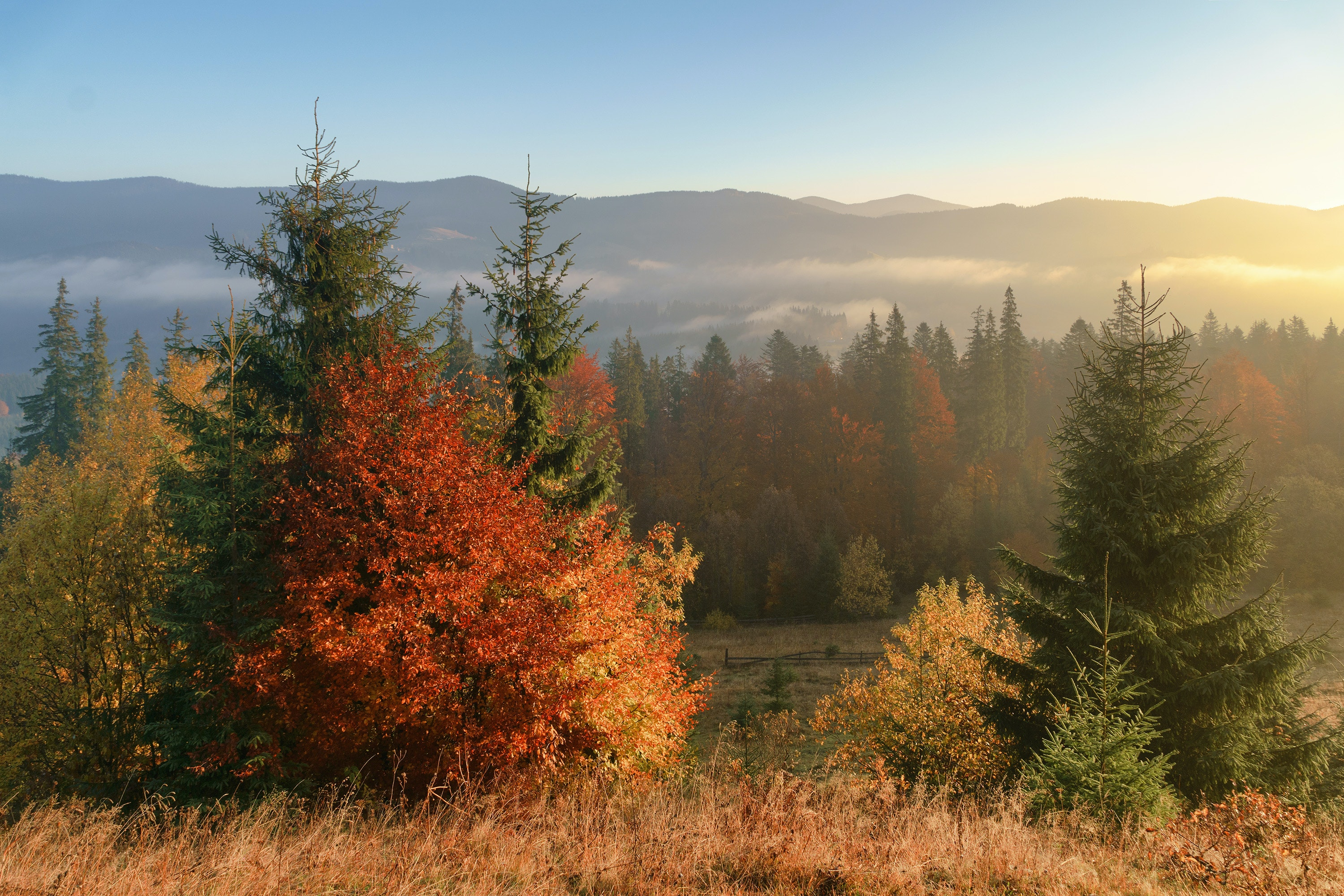 With over 100 species of trees, Great Smoky Mountains National Park boasts an impressive variety of fall color.