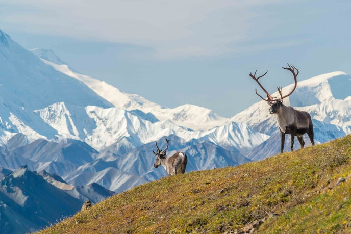 Denali National Park and Preserve offers plenty of outdoor activities and opportunities to spot wildlife.