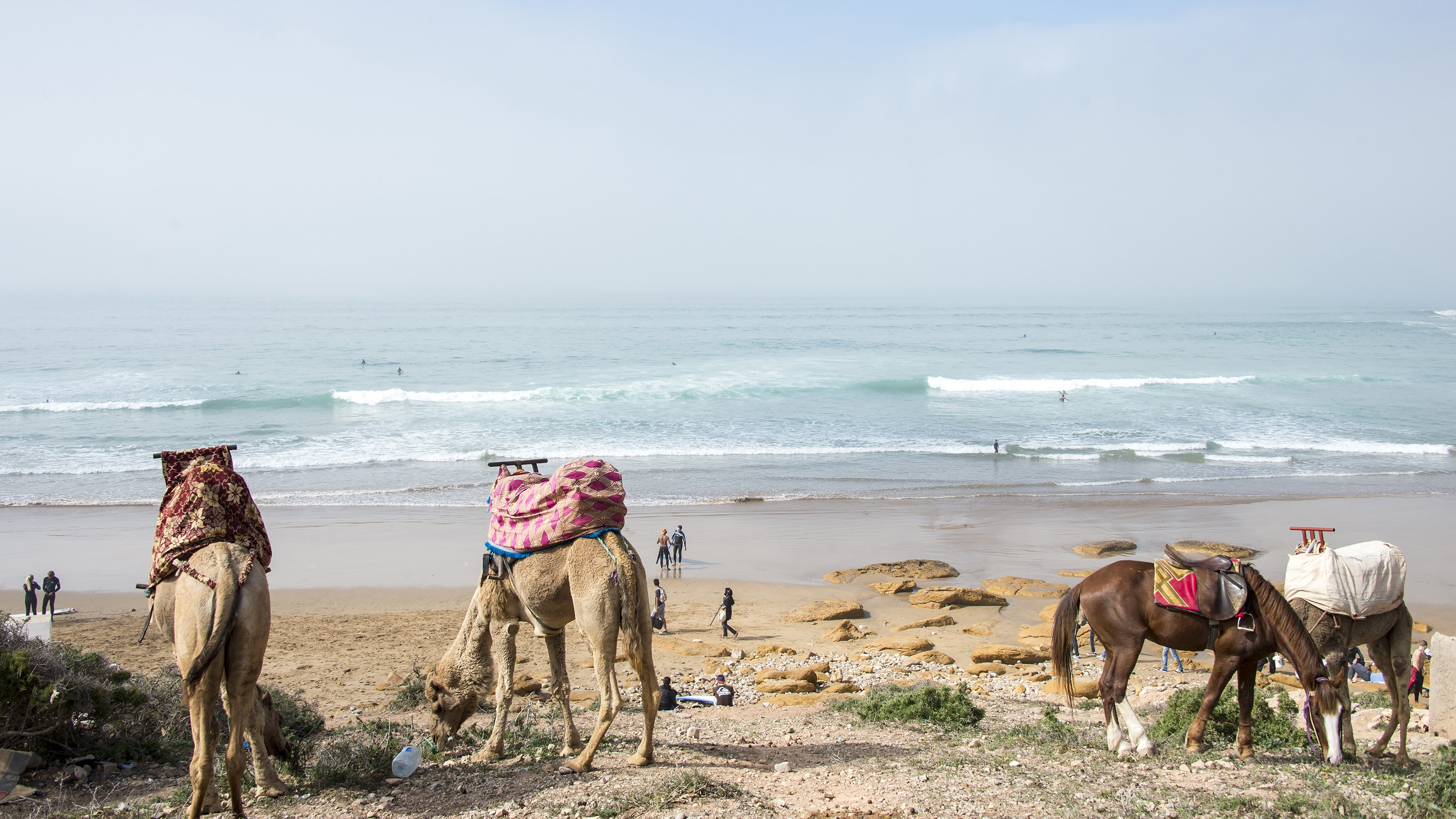Locals, surfers, and camels mingle on a Taghazout beach.