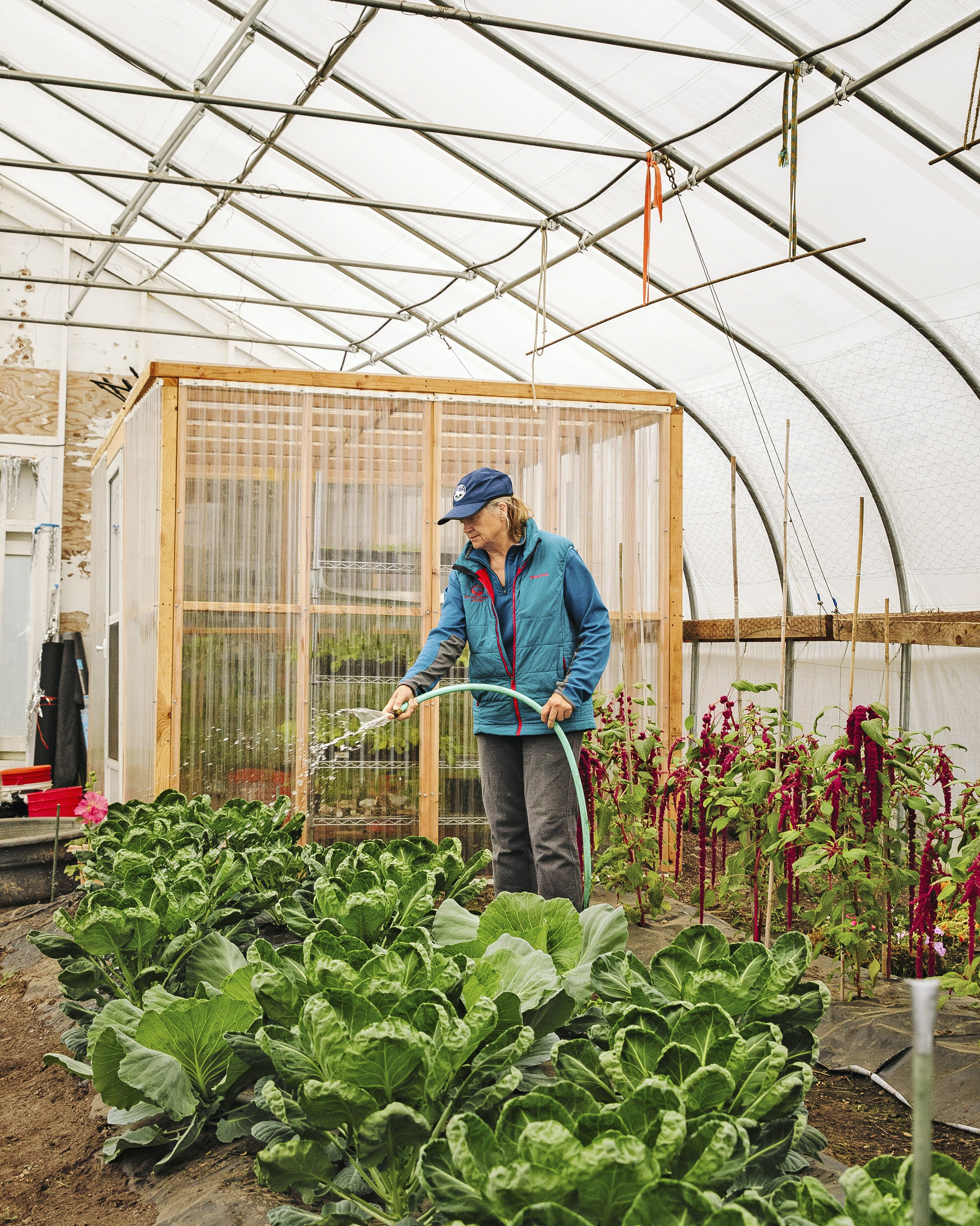 Proprietor Donna Claus waters greens that will go into the lodge's meals.