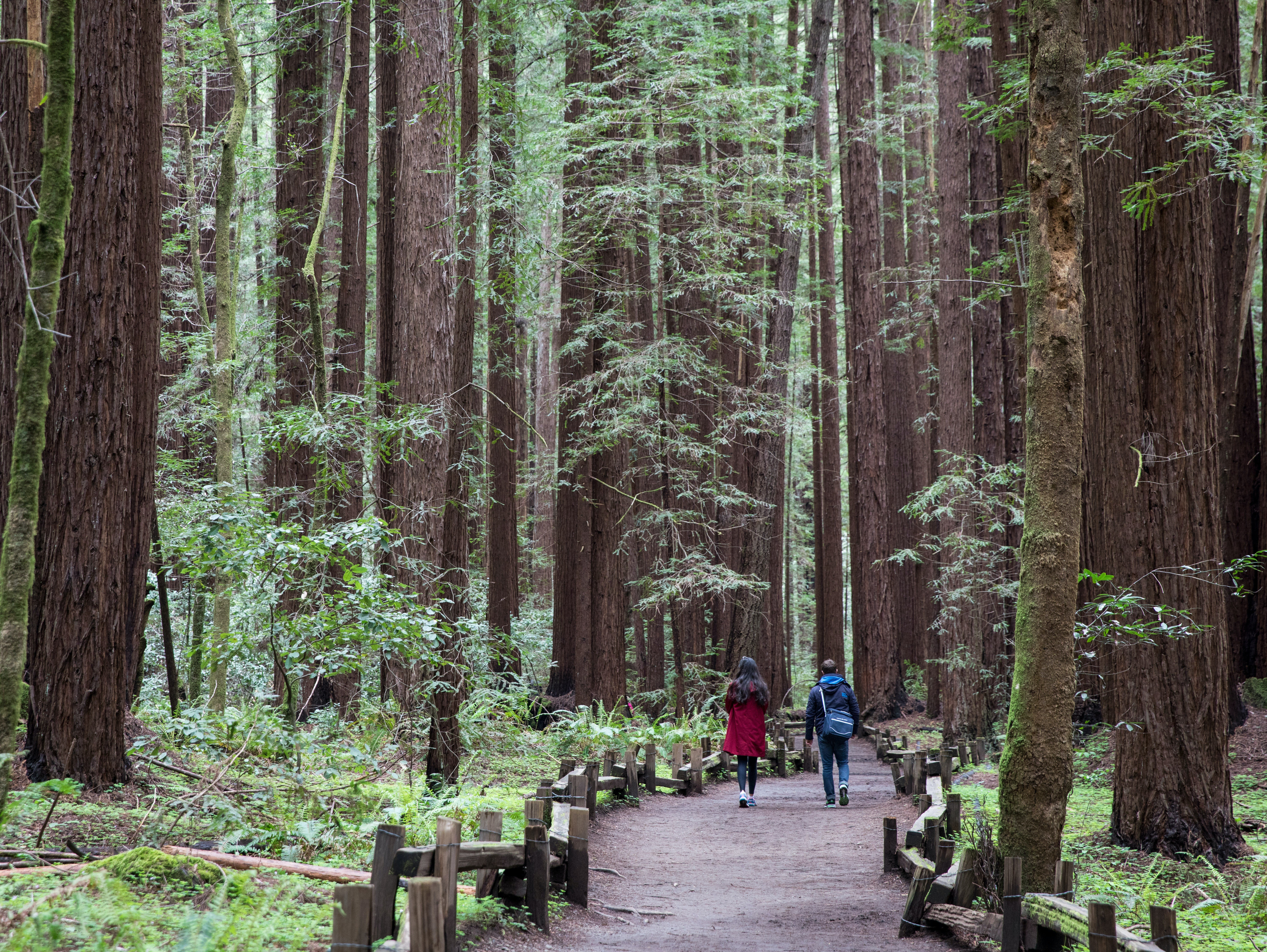 Armstrong Redwoods State Natural Reserve in Guerneville, California