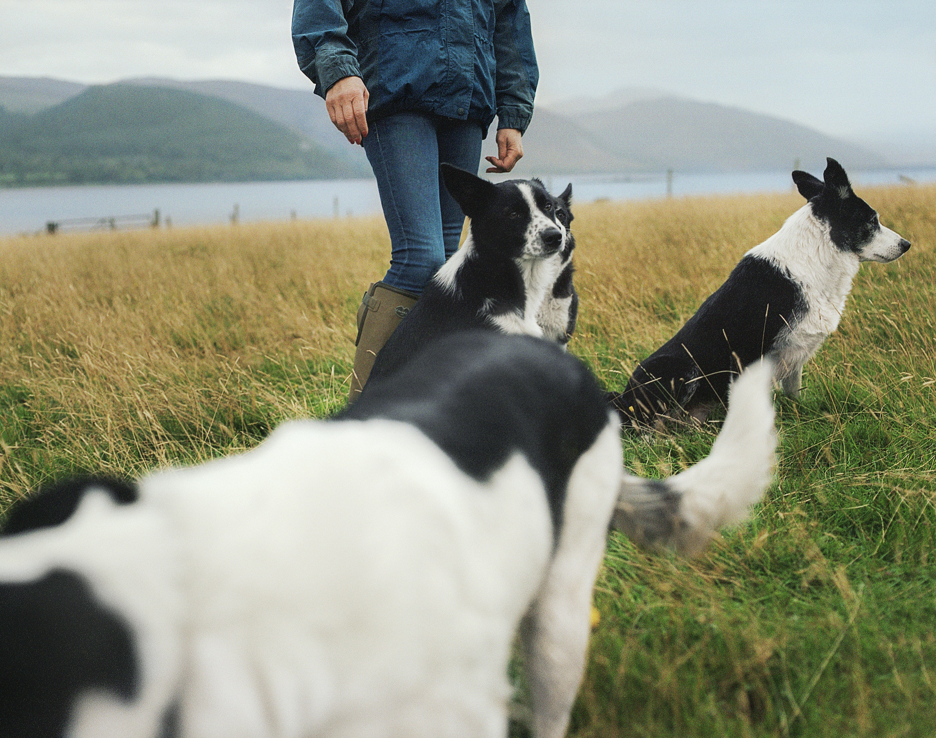 Collie dogs are a common sight on the route.