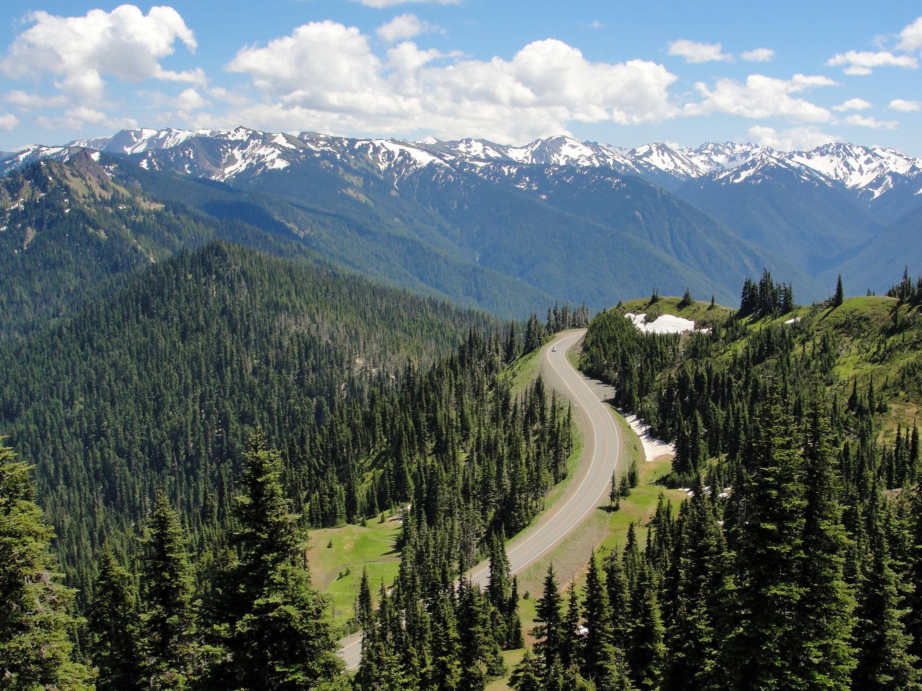 Olympic National Park is one of the few U.S. places with rain forests.