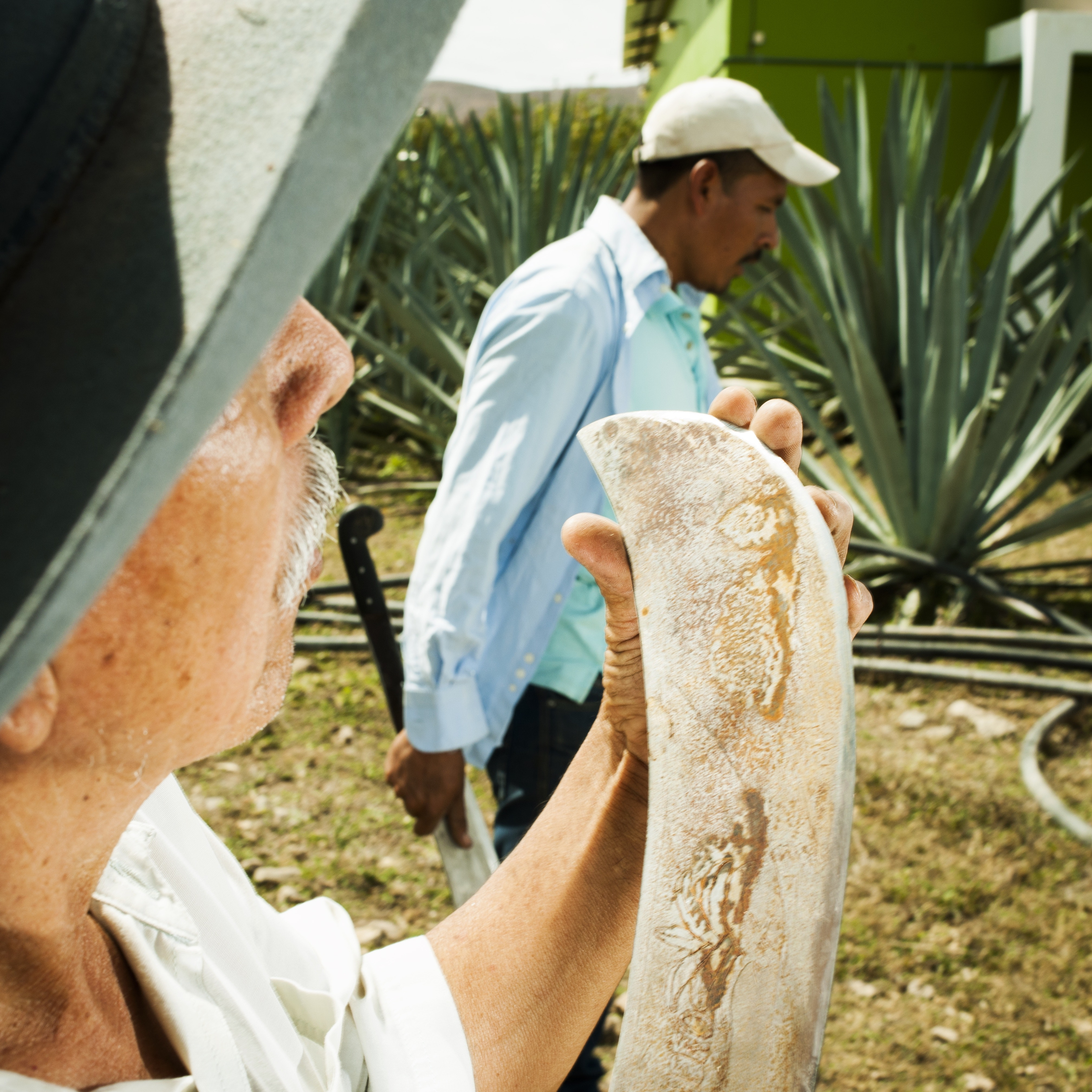 """Mezcal is traditionally handcrafted by small-scale producers on farms known as """"palenques."""""""