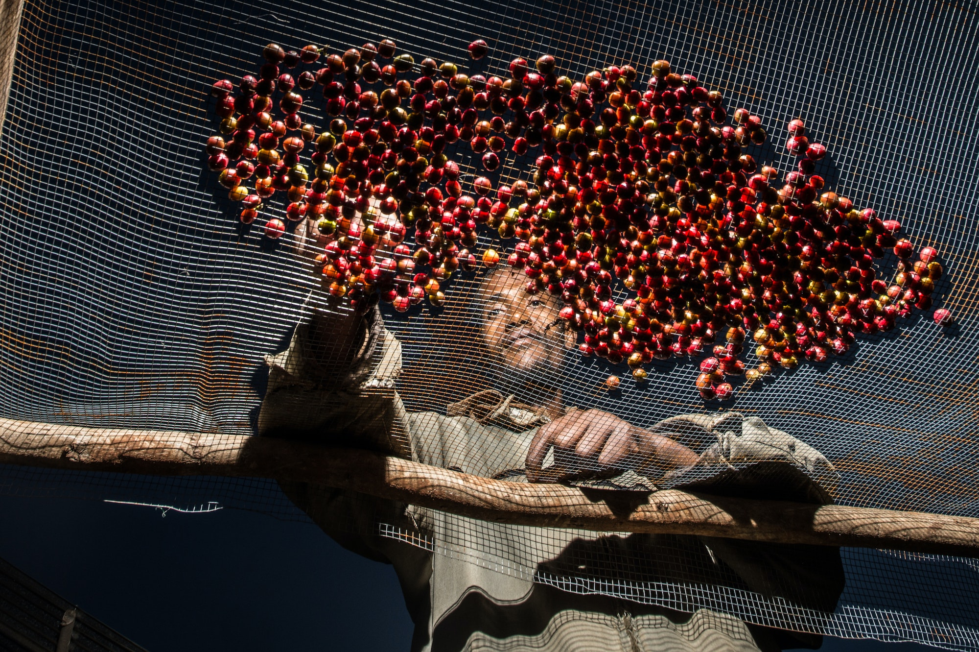 Mohammad Abafita, an Ethopian farmer, sorts cherries that will be processed into coffee beans.