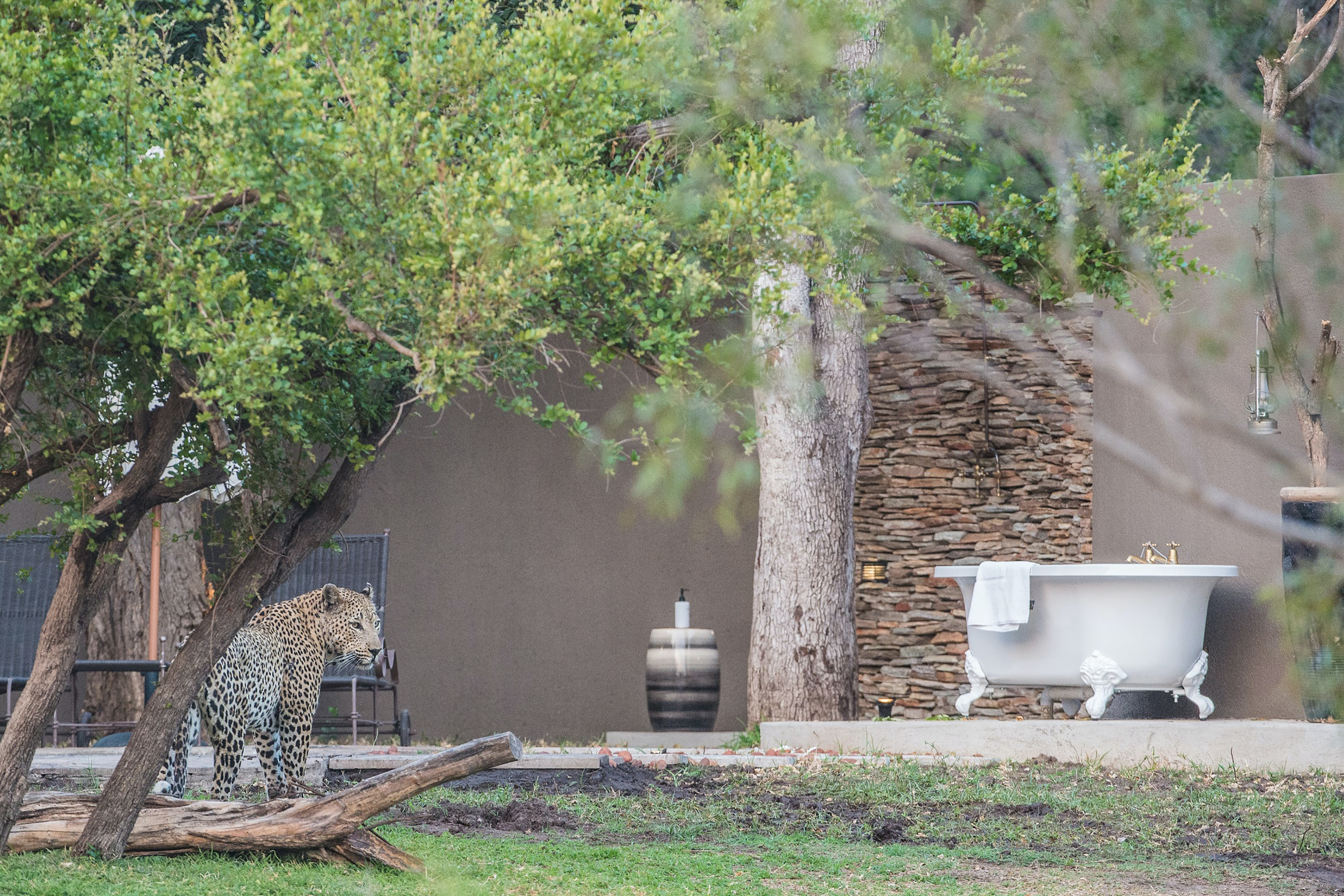 Keep an eye out for big cats while bathing at Sabi Sabi.