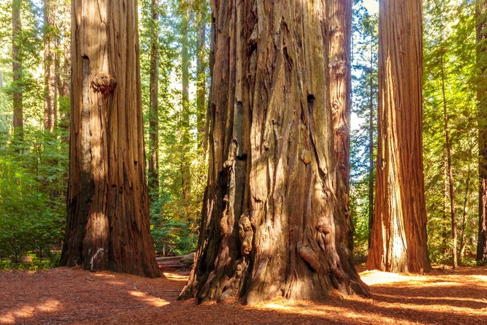 Spend time dwarfed by ancient trees at Redwood National Park.
