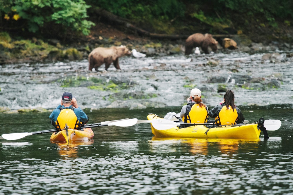 Bears spotted on a kayaking excursion. Photo by Cameron Zegers/UnCruise Adventures