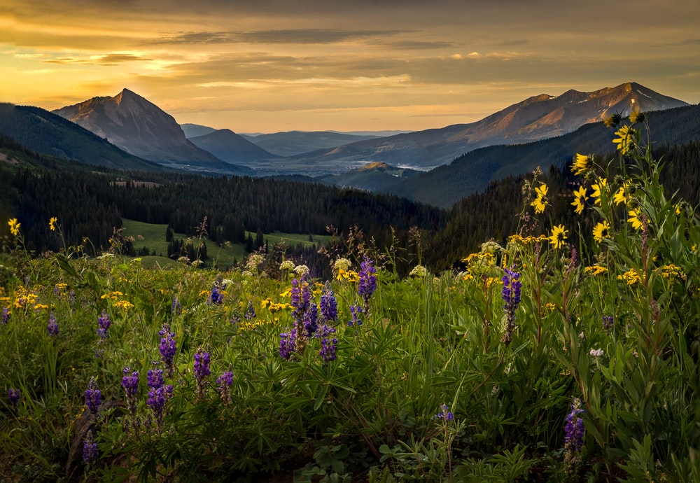 Take a weekend trip from Denver to Crested Butte for its Wildflower Festival in July.
