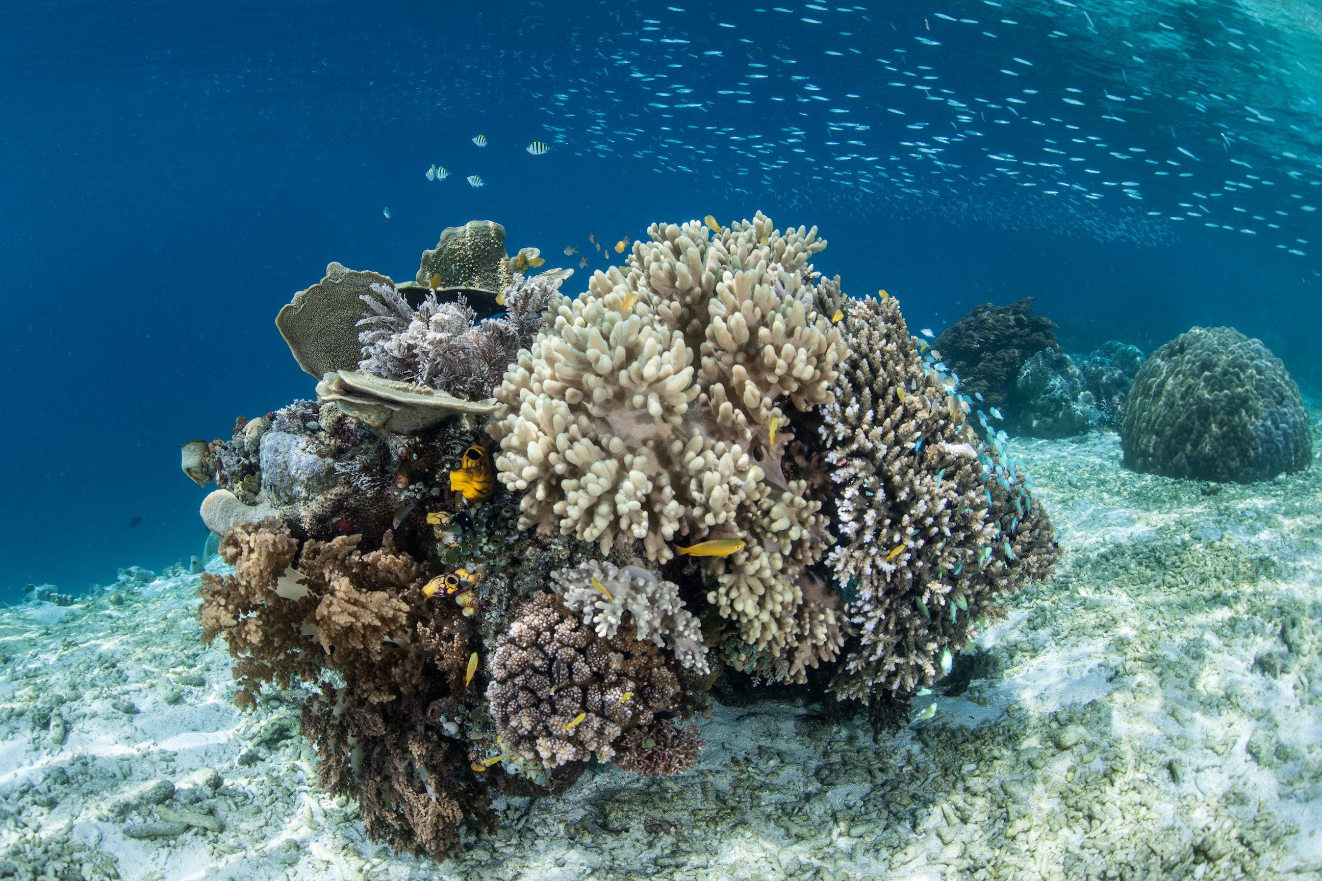 Raja Ampat is rich with coral and marine life.