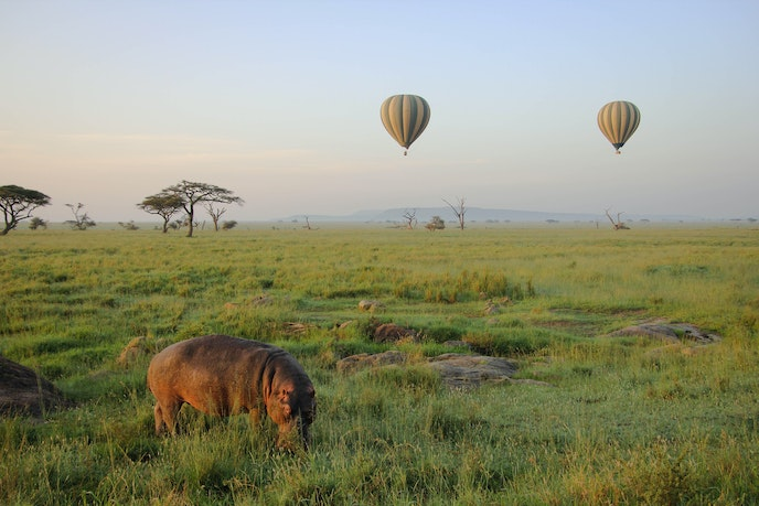 Zicasso offers families the option to take an early morning hot air balloon ride above the Serengeti.