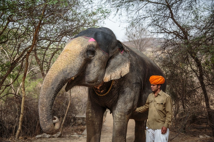 Guests at Dera Amer can walk with elephants, accompanied by a naturalist.