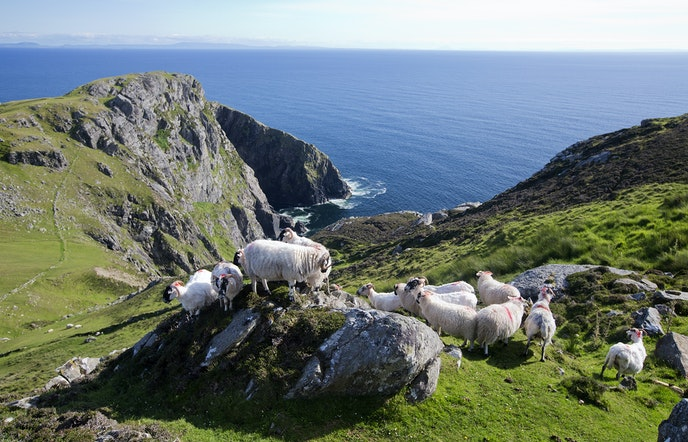 Slieve League is home to some of Europe's tallest sea cliffs.