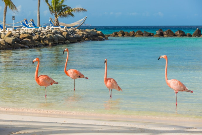 Grab your crew and head to Aruba this summer.