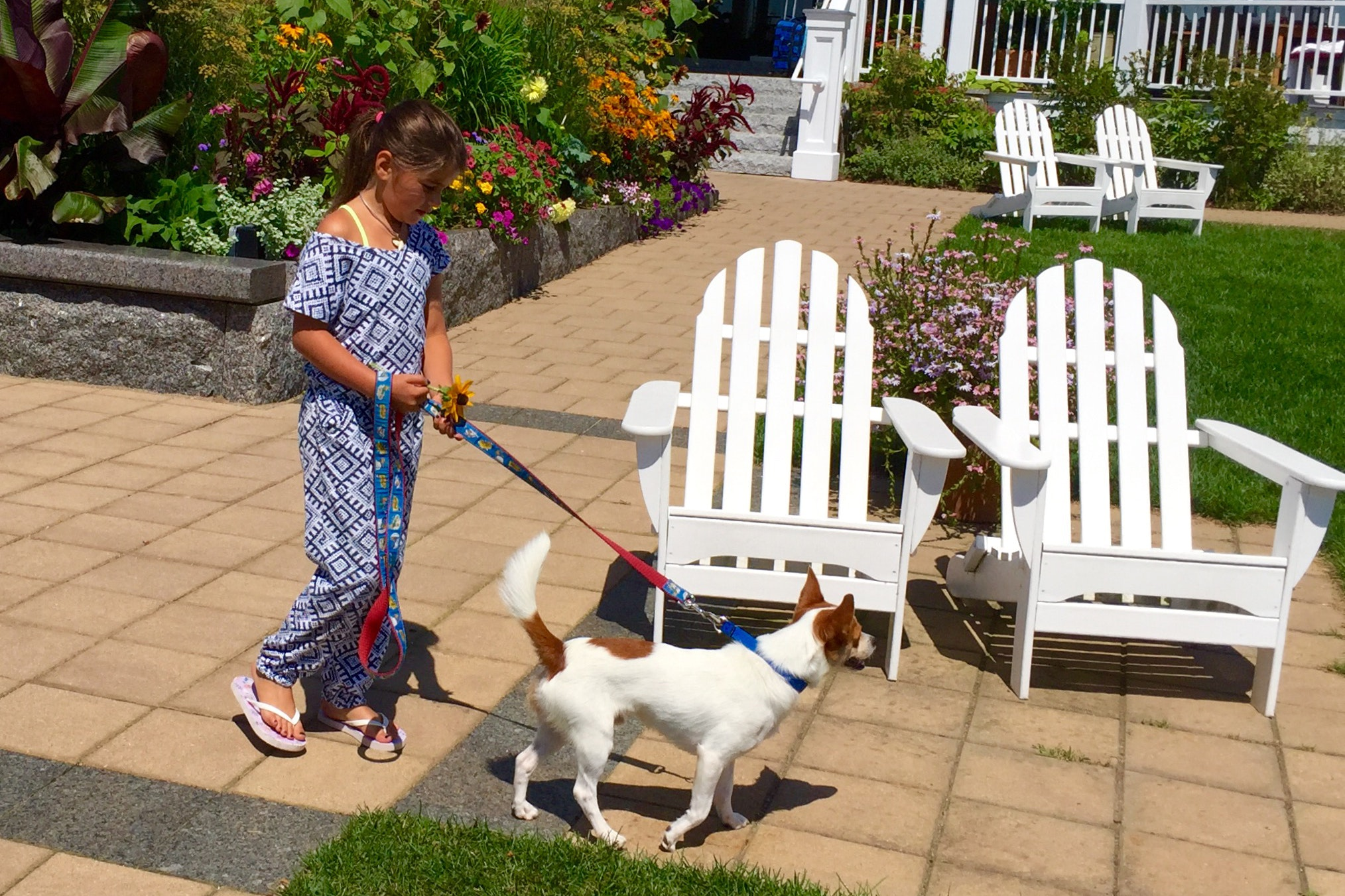Guests are welcome to walk Inn by the Sea's resident foster dog.