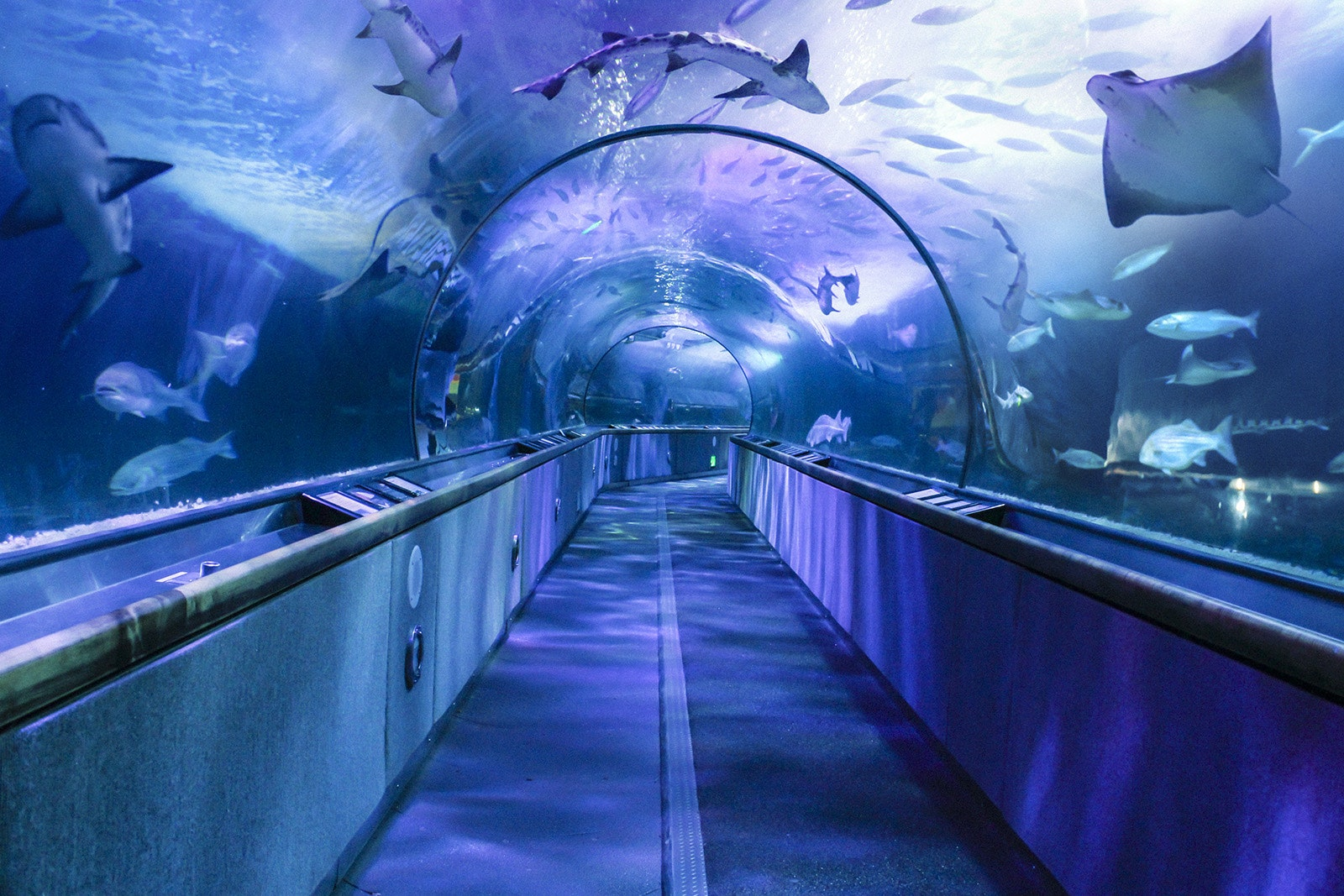 Be part of the action at the Aquarium of the Bay.