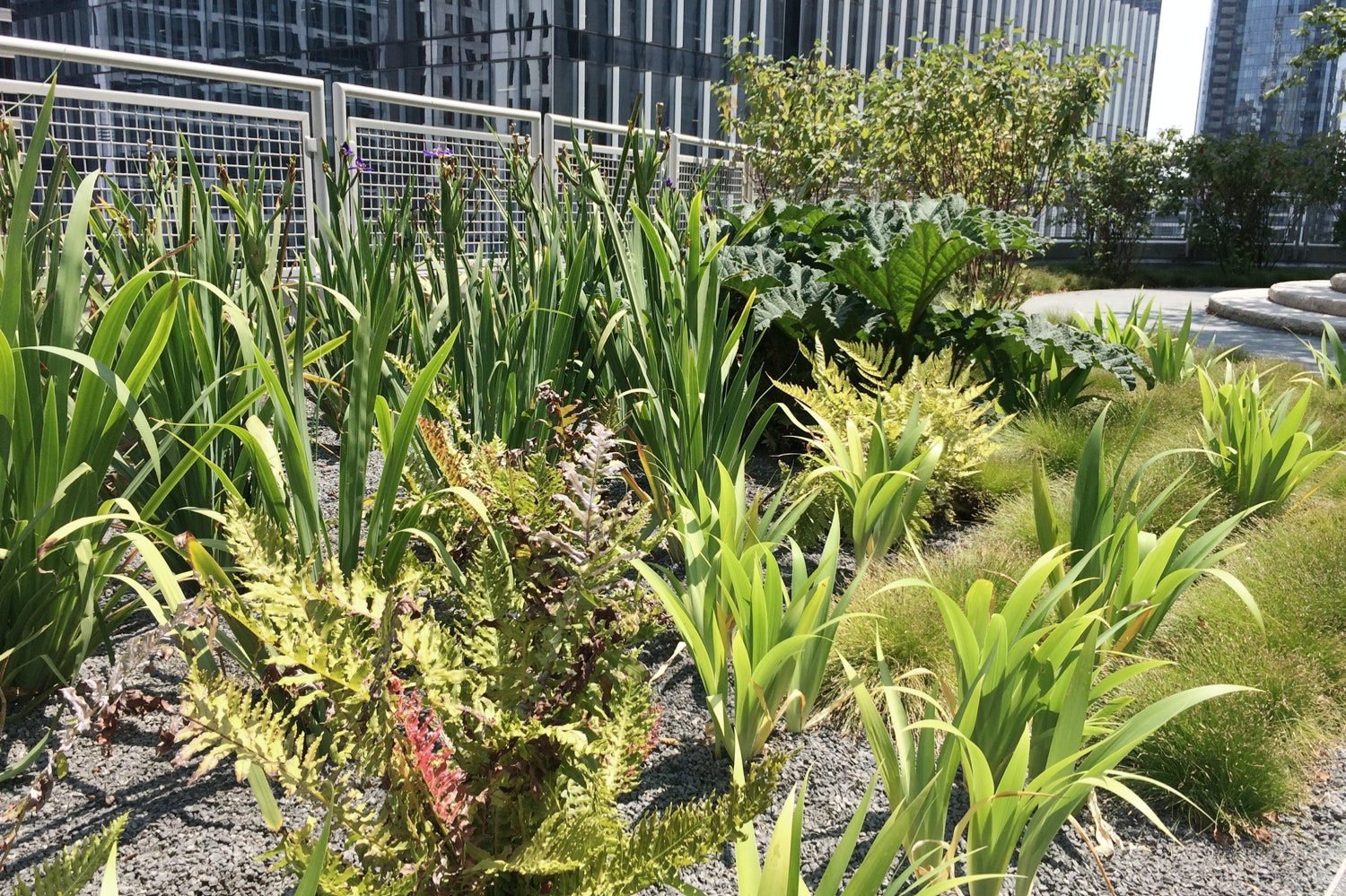 The Prehistoric Garden on the northeast end of Salesforce Park sits between the Mediterranean Basin and the Wetland Garden.