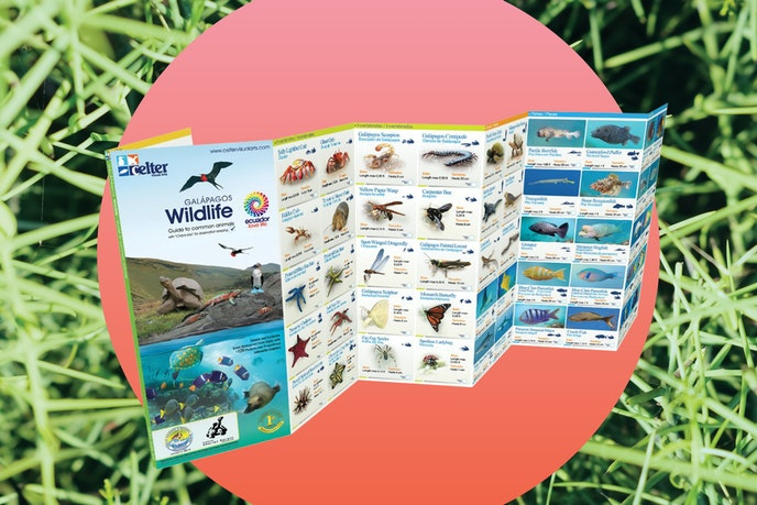 A field guide will help you spot wildlife during your trip.