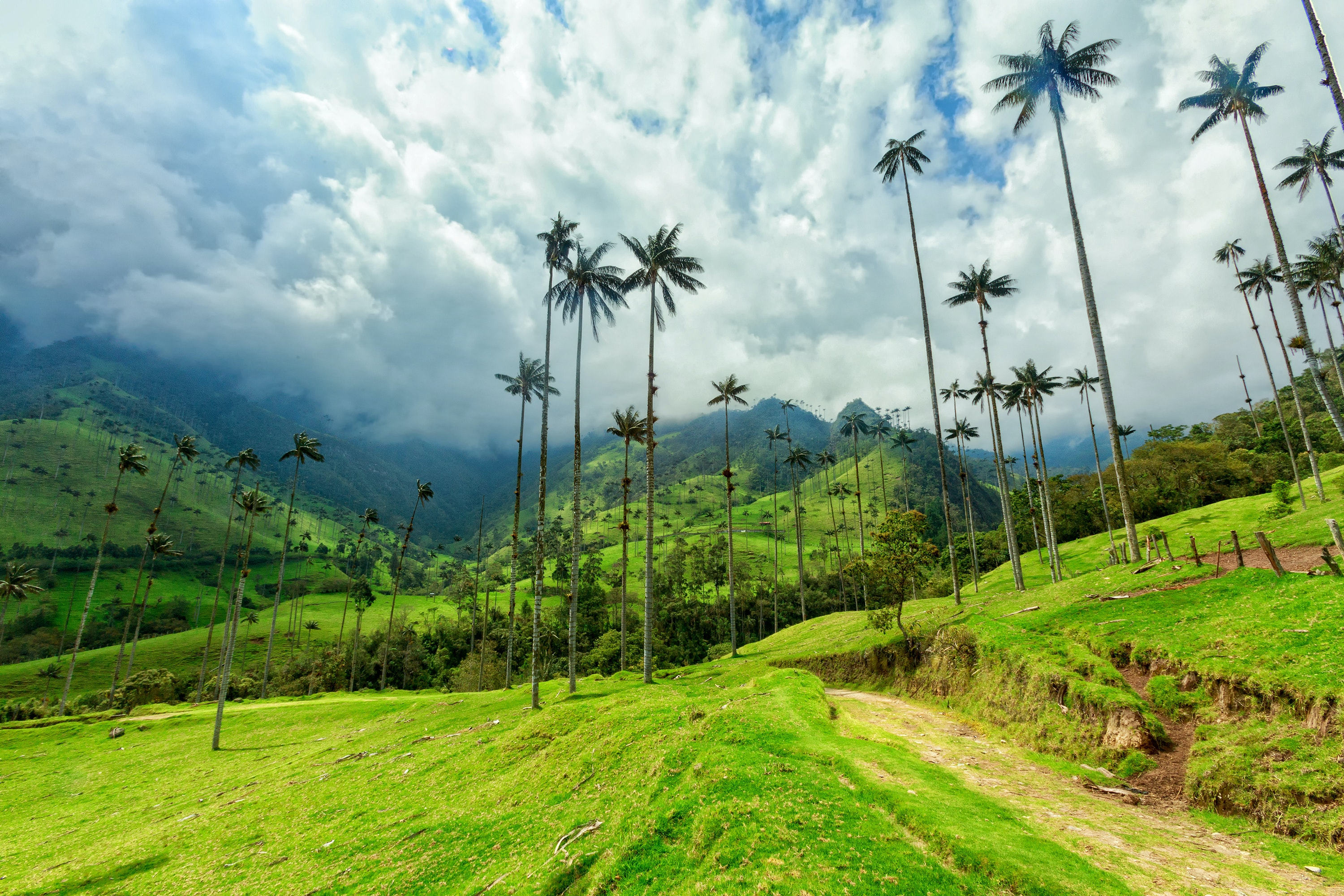 Bike and hike through Colombia's Cocora Valley with Trek Travel.