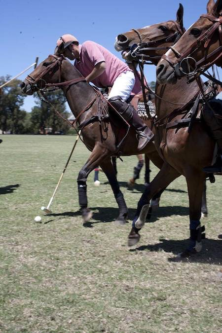 argentine polo