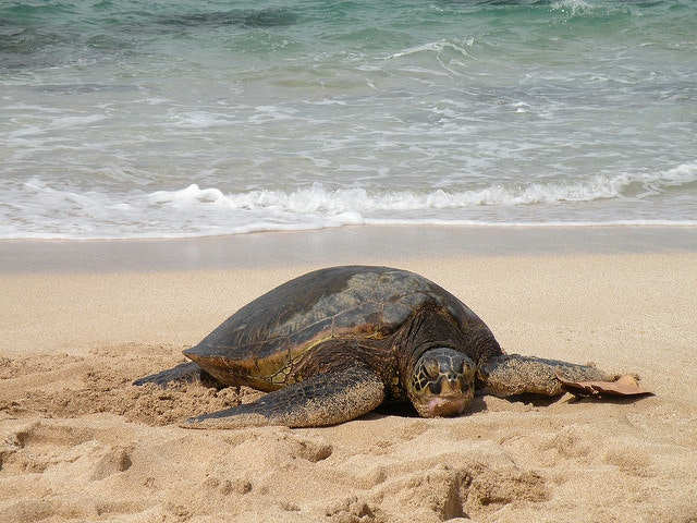 Protected turtles are happy turtles