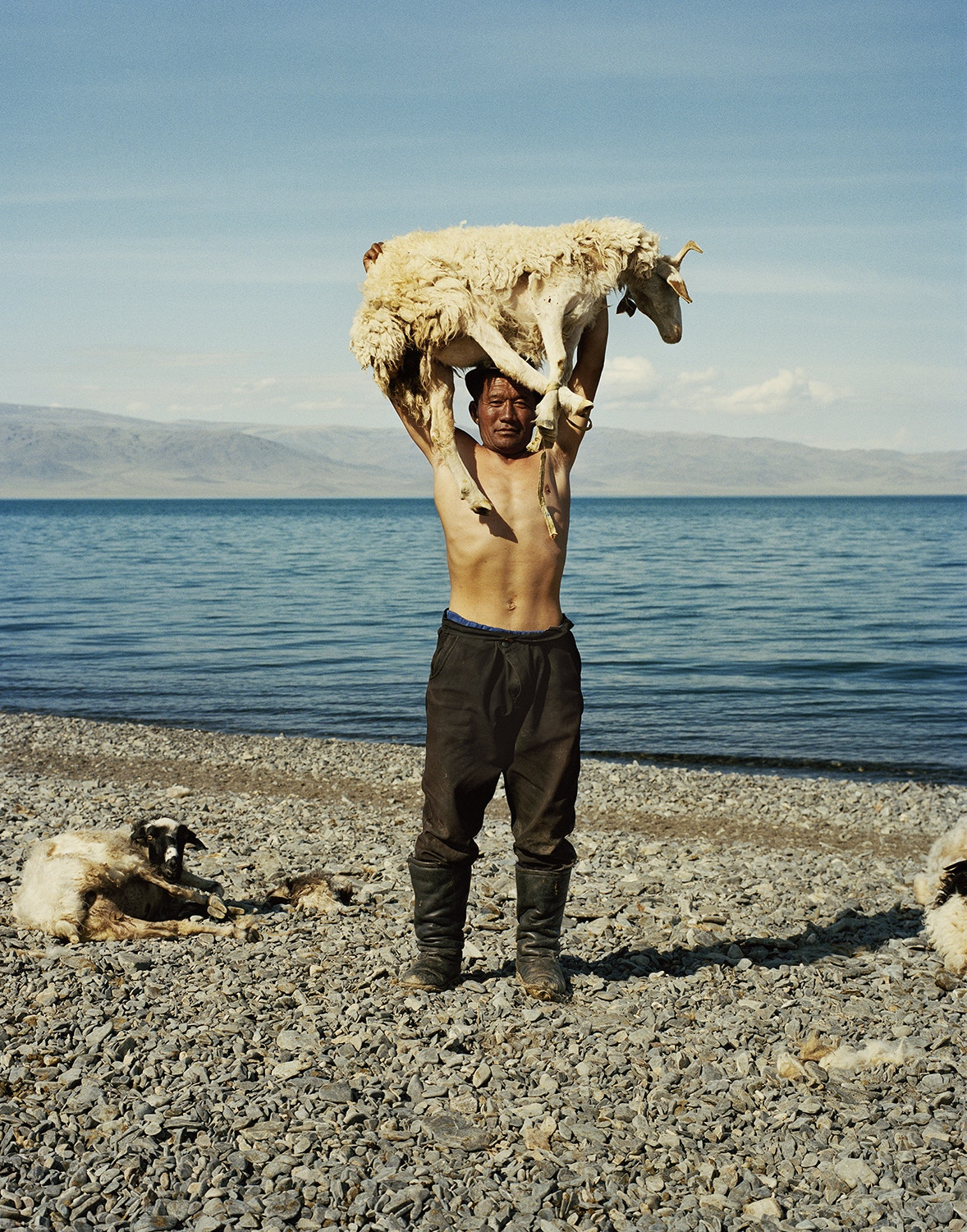 Mongolia's nomadic herders tend to sheep, goats, camels, yaks, and horses just as their ancestors have for thousands of years.
