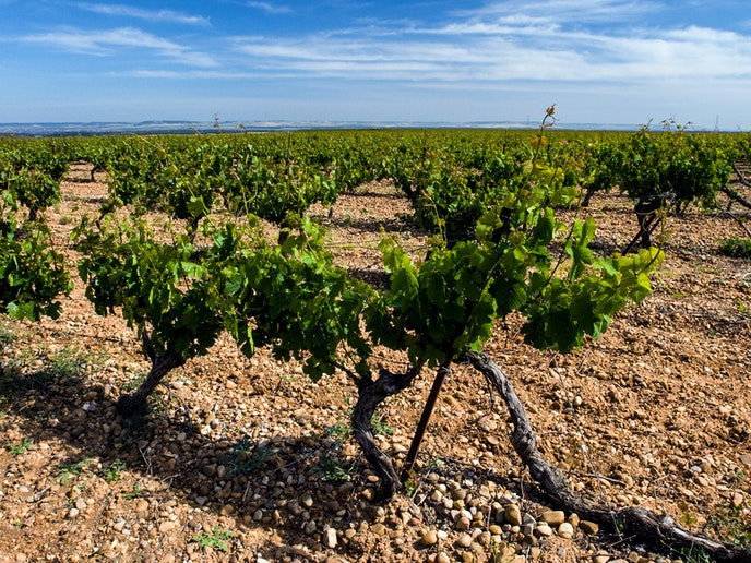 The Rueda region, set just an hour away by train from Madrid, is the capital of verdejo, a white wine; try it at standout wineries like Bodegas Hermanos del Villar.