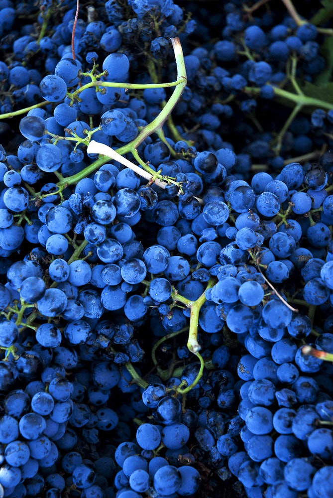 Sicilian winemakers are calling attention to the island's indigenous grapes.