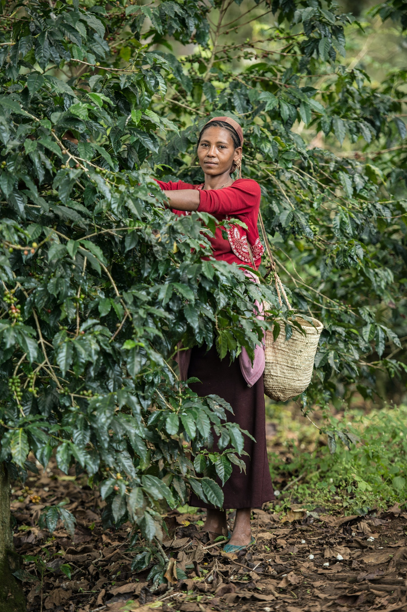 Ethiopia is the world's seventh largest producer of coffee, and Africa's top producer.