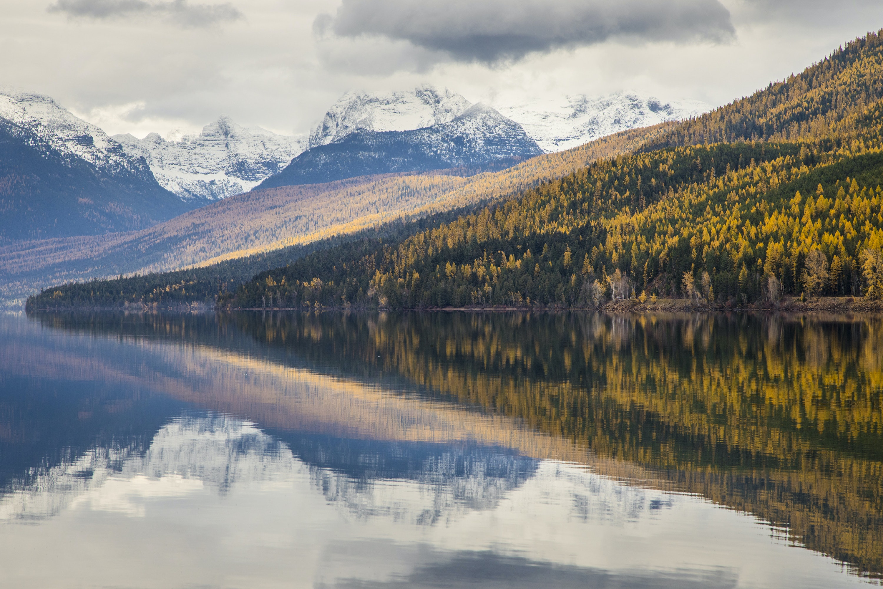 Glacier National Park is known for a particular deciduous pine that turns bright yellow in the fall.