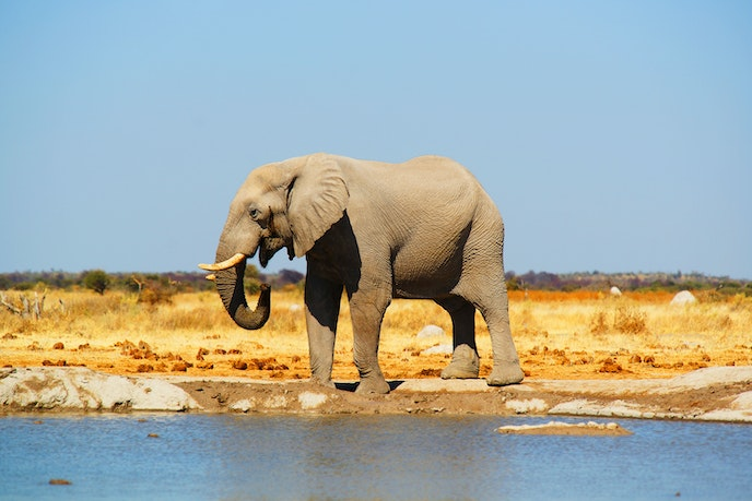 The Okavango Delta in Botswana is a vast, lush area suitable for Africa's most stunning animal populations.