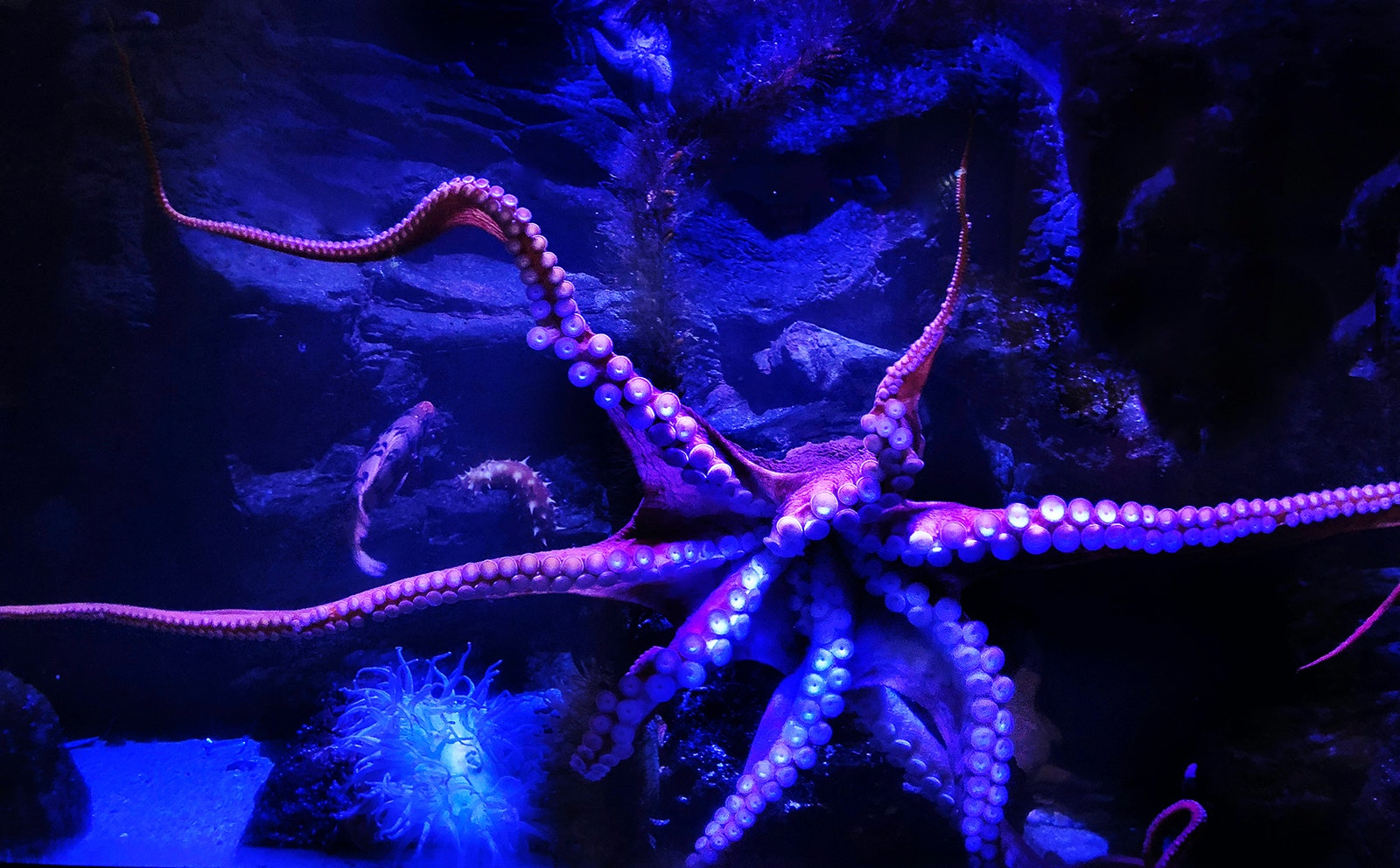 See the sea's cephalopods at the Birch Aquarium.