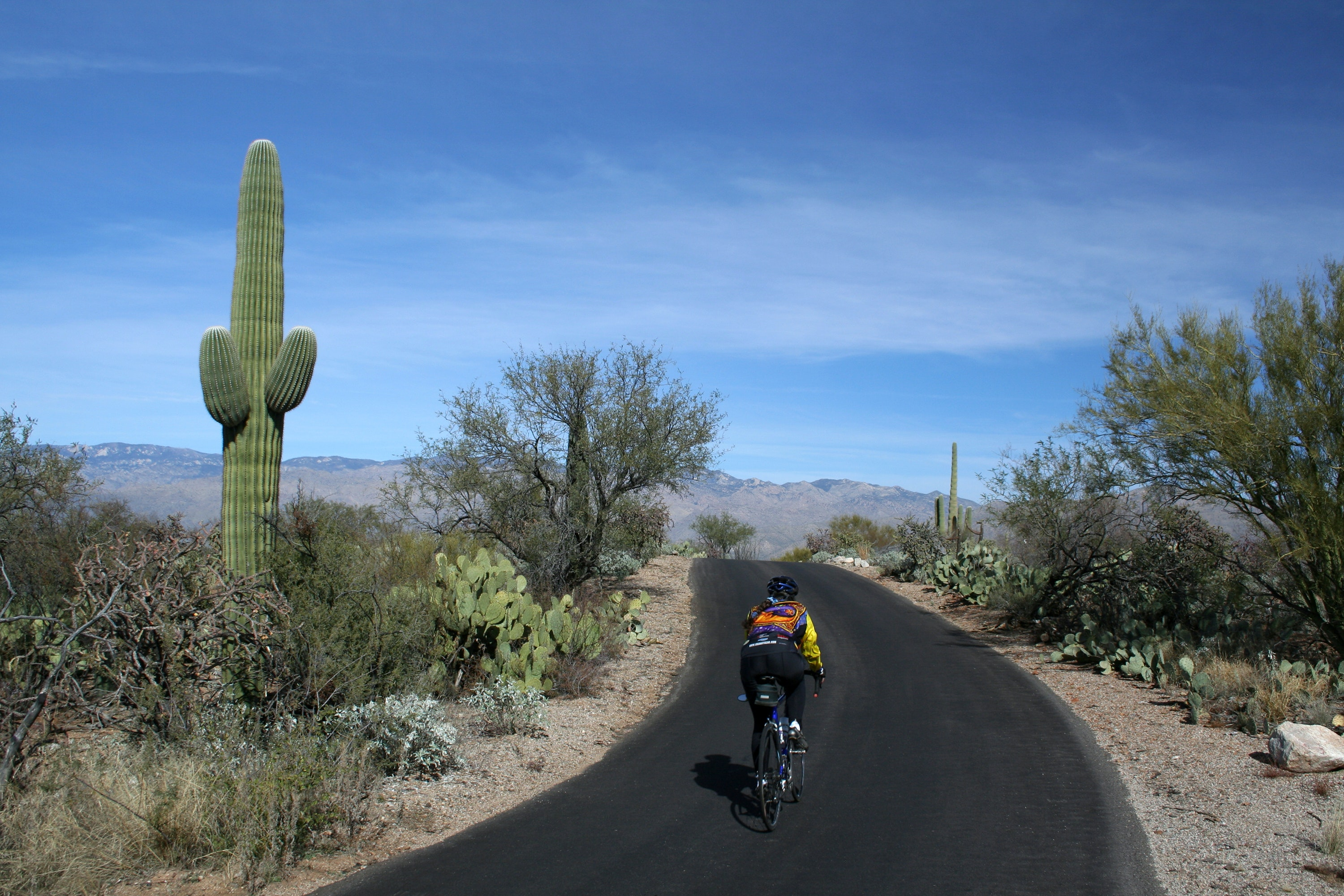 Saguaro National Park East contains routes for bikers of all types.