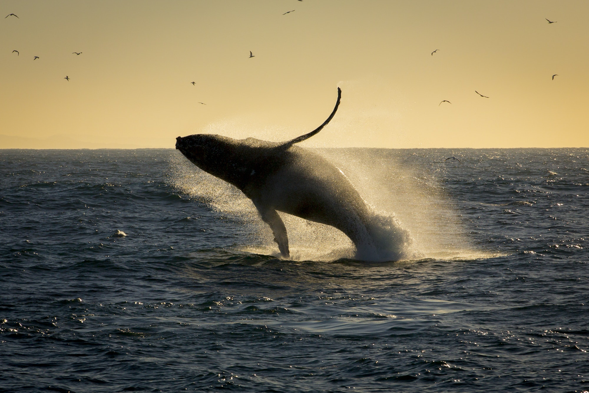 The best time for whale-watching in South Africa is from June to November along the Cape Peninsula.