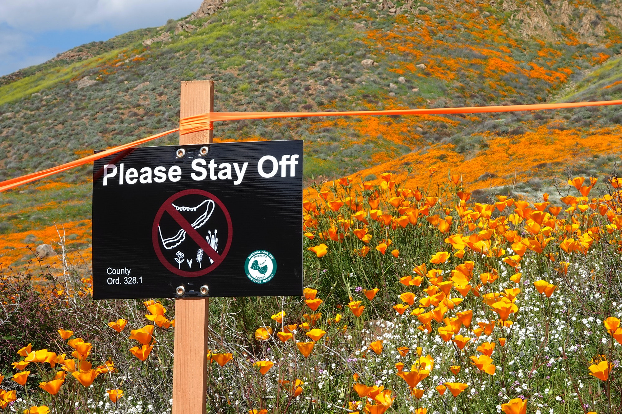 Despite signs, many super bloom fans have ignored warnings to stay out of the poppy fields.