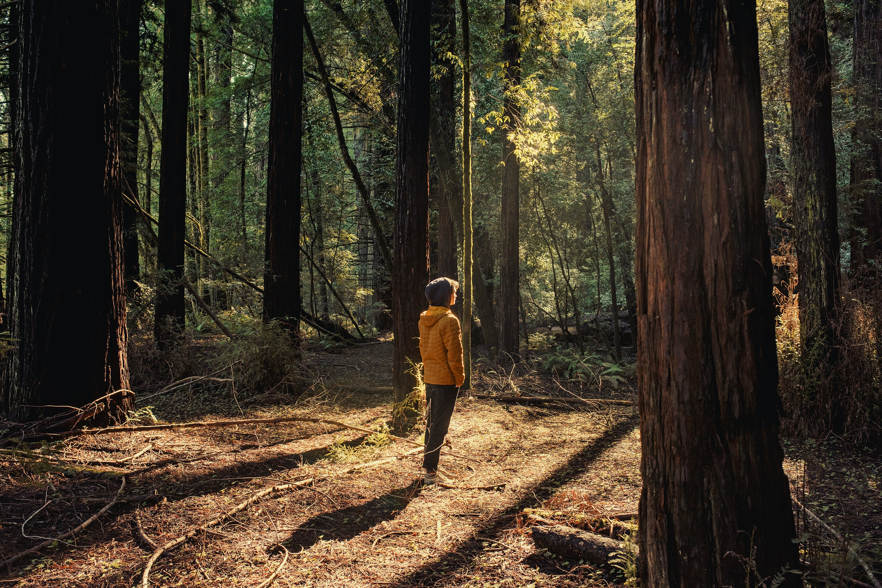 Hendy Woods State Park spans 816 acres and includes two old-growth redwood groves.