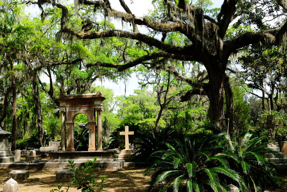 Spanish moss clings to the trees in Bonaventure Cemetery.