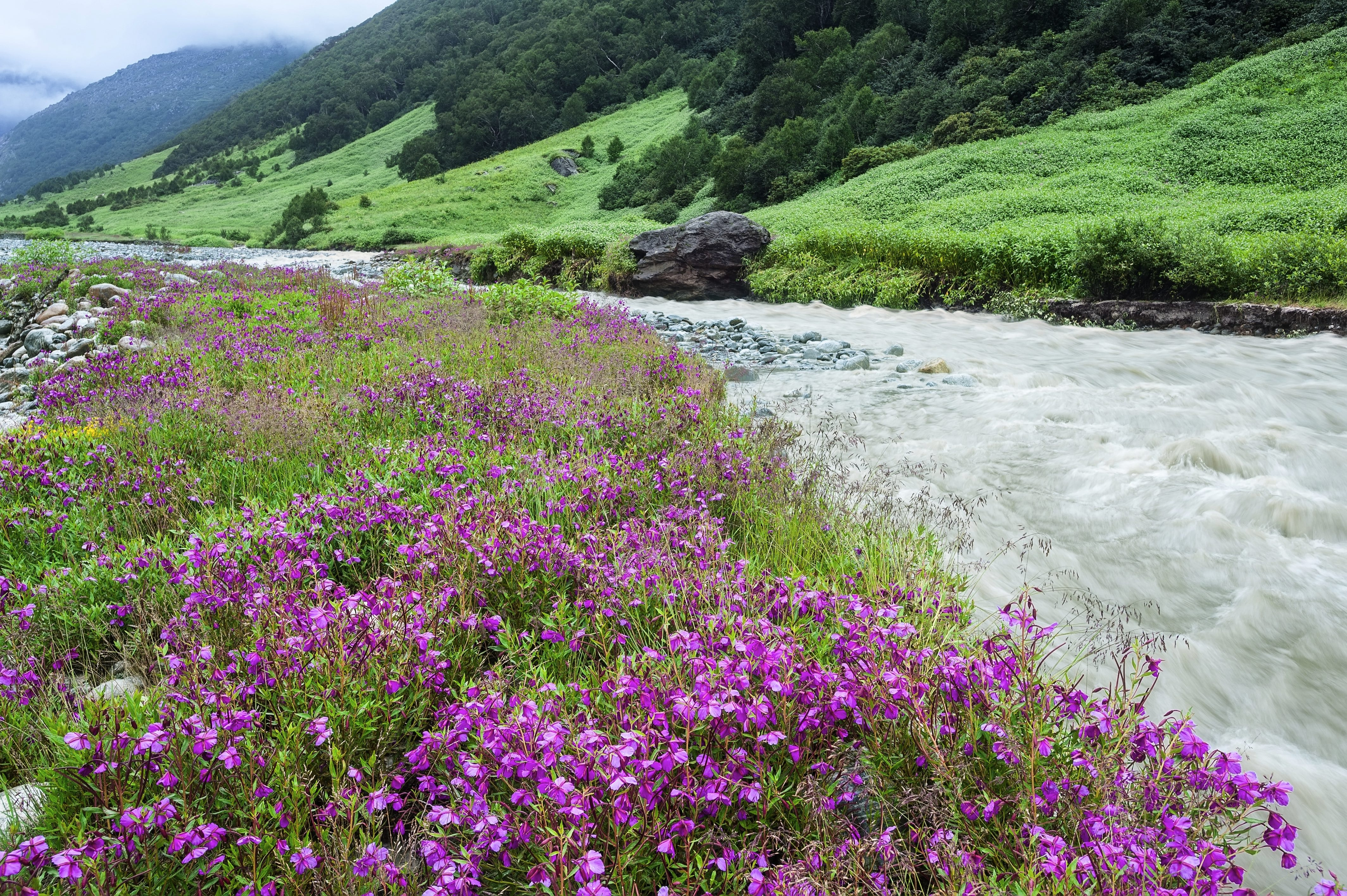 Valley of Flowers National Park: Remote? Yes. Gorgeous? Also yes.