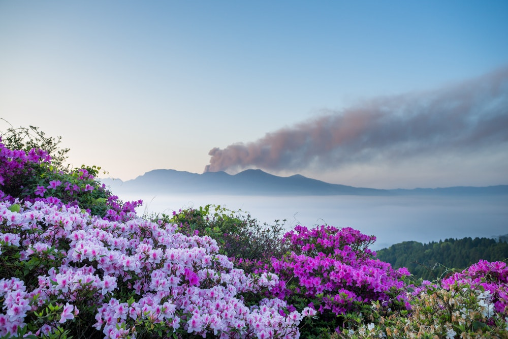 Cherry blossoms may get the most press in Japan, but a hunt to spot azaleas will get you farther off the beaten track.