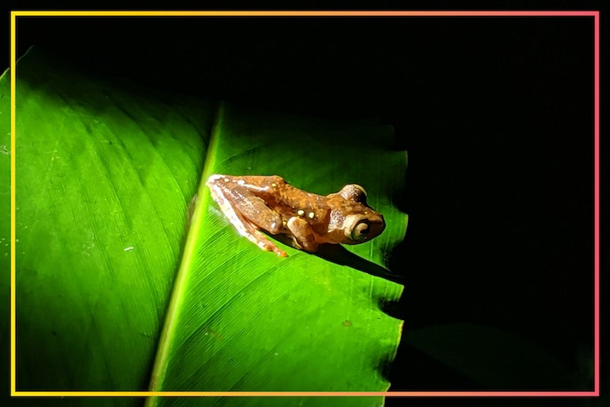 Borneo is a wonderland for wildlife photographers, so be sure to pack your zoom lens.