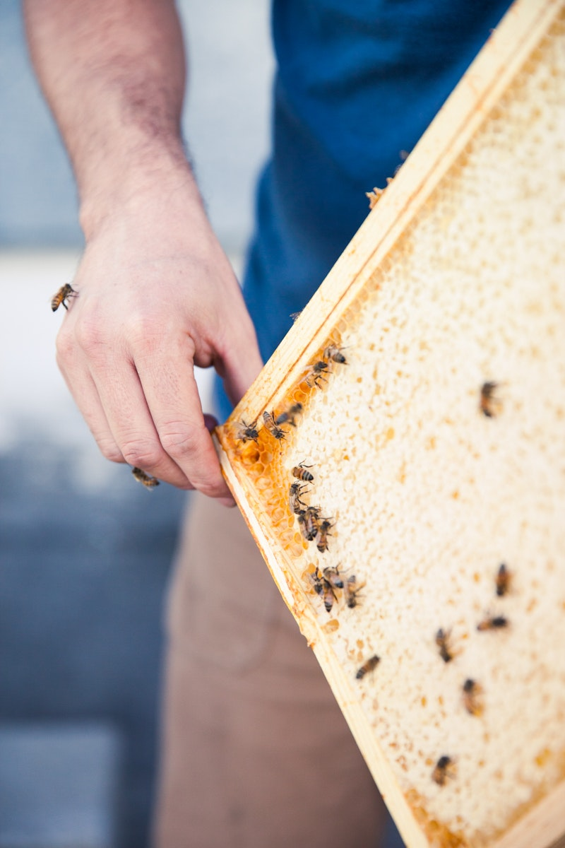 Bee Local practices sustainable beekeeping focused on specific terroirs throughout the Pacific Northwest.